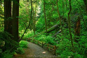 portland-trail
